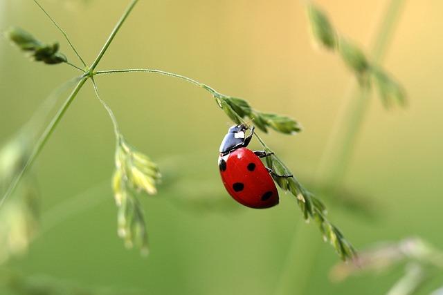 ladybird-women-in-tech-blog